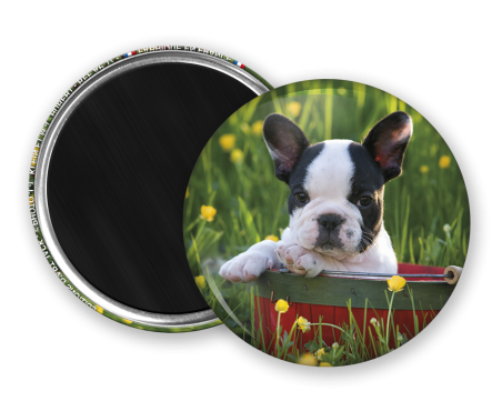 Magnet rond - Chiot